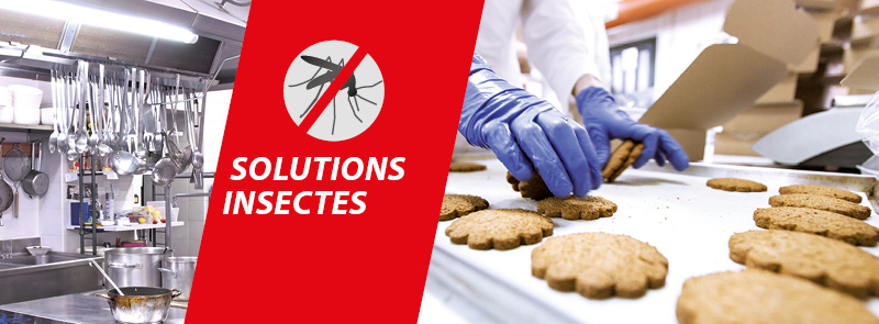 solutions insectes
