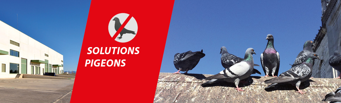 Lutte contre les pigeons