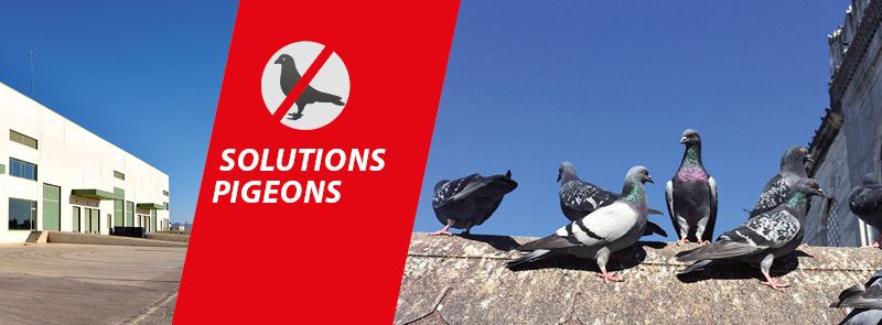 solutions pigeons