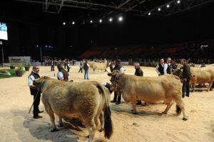 Sommet de l'élevage - ring vache